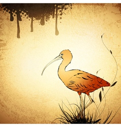 Red ibis vintage background vector