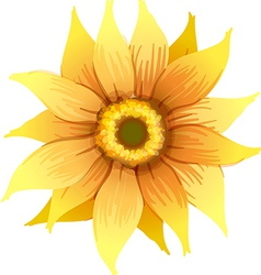 A yellow flower vector