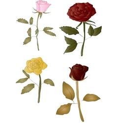 Isolated roses vector