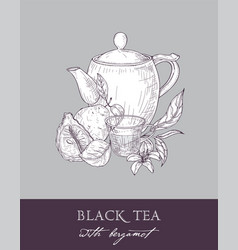 Monochrome drawing of teapot cup tea leaves vector