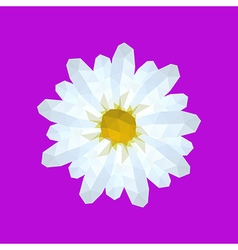 Beautiful origami white daisy vector