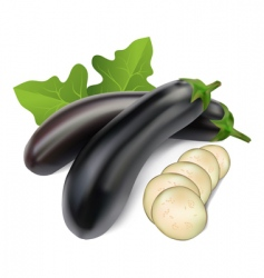 aubergine vector image vector image