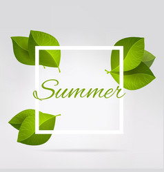 Fresh green leaves in a square summer vector