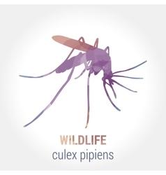 Wildlife banner - culex pipiens vector image vector image