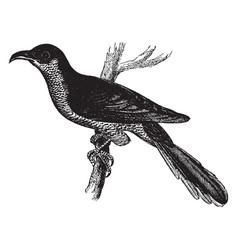 Small yellow billed cuckoo vintage vector