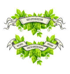 Fresh hop plants with green vector