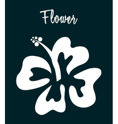 Hawaii flower vector