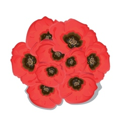 Poppy flowers on white background vector image vector image