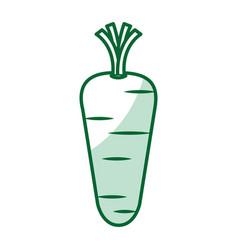 carrot vegetable healthy food vector image