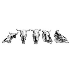 cow and bull skull set vector image