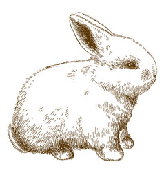 Engraving of fluffy bunny vector