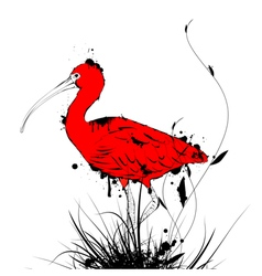 Grunge Vintage Red Ibis vector image vector image