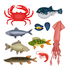 seafood set with crab fish mussel and shrimp vector image