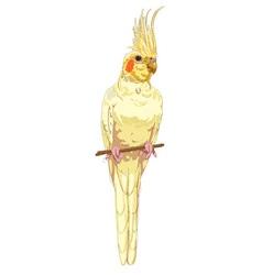 White cockatiel vector
