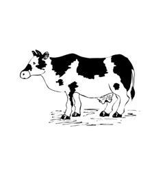 Cow drawing cartoon vector image