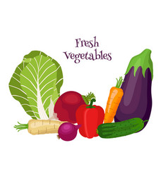 fresh vegetables - bok choy eggplant carrot vector image vector image