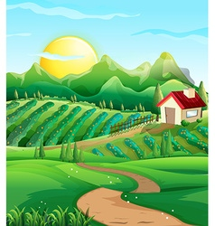 Scene with vegetables in the farmyard vector