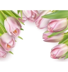 Pink fresh tulips on white eps 10 vector