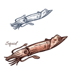 Squid isolated sketch icon vector