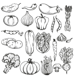 Big collection of vegetables vector