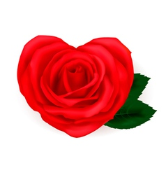heart shaped rose vector image