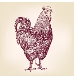 Chicken hand drawn llustration realistic vector