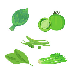 Fresh organic green food set vector
