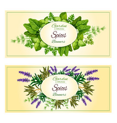 Herbal spices herbs banners set vector