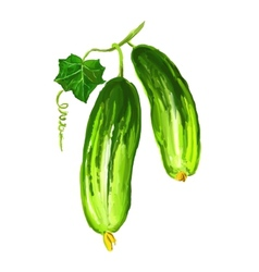 Cucumber vegetable hand drawn vector