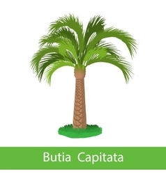 Butia capitata cartoon tree vector
