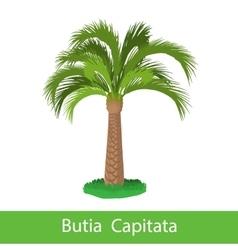 Butia Capitata cartoon tree vector image