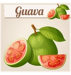 Guava fruit Cartoon icon vector image vector image