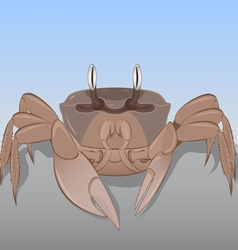 Crab on the rock vector