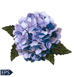 Blue realistic hydrangea lavender vector