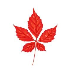 Autumn parthenocissus foliage creative in cartoon vector