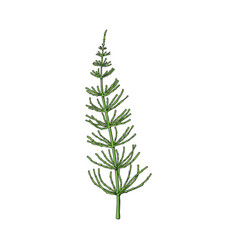 Beautiful elegant hand drawn equisetum horsetail vector