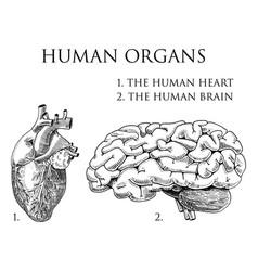 Human biology organs anatomy vector