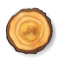 cross section tree wooden stump realistic vector image