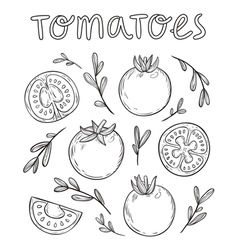 Sketched tomatoes vector image vector image