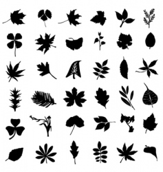 Set of leaf vector