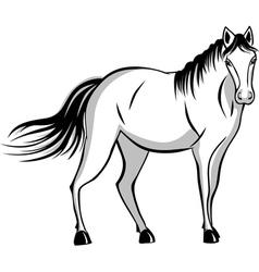 Quietly standing horse vector