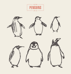 set penguins hand drawn sketch vector image vector image