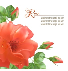 Flower rose background vector