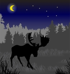 Elk in the night forest vector