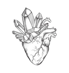crystals growing from human heart isolated vector image vector image