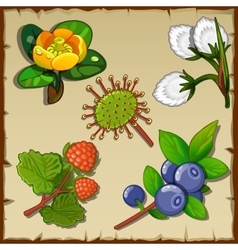 Big set of wild forest flowers and berries vector