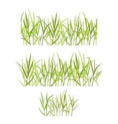 Realistic green grass vector