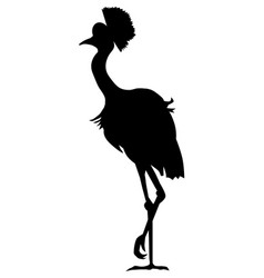 African crowned crane vector