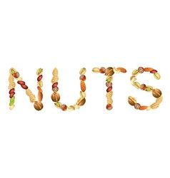 nuts word vector image