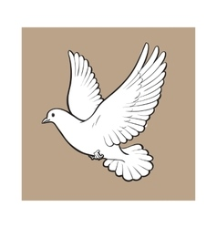 Free flying white dove isolated sketch style vector image